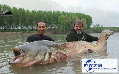 【图】最大鲶鱼竟然重达293公斤 这得吃几年?