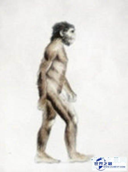 【图】西游记里面的四大灵猴都是那四个 都有什么本领