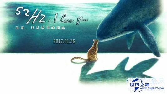 【图】你听过52赫兹鲸的故事么 世界上最孤单的鲸鱼