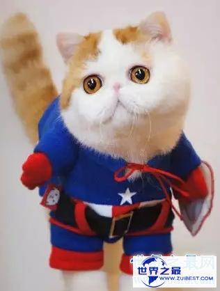 【图】天使脸孔魔鬼身体事实迷你版加菲猫红小胖snoo