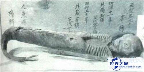 【图】世界上有美人鱼吗 关于美人鱼的切实报道旧事
