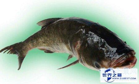【图】厨房大知识 你知道哲罗鱼怎么做才更好吃吗