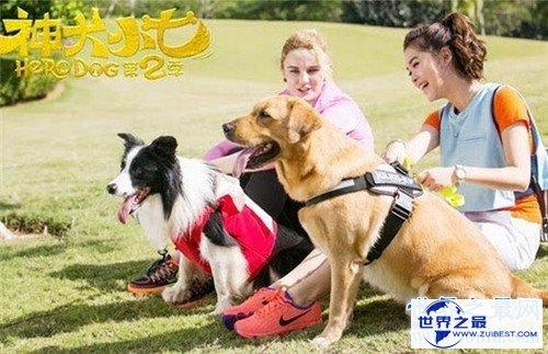 【图】神犬小七2有哪些名狗 在海南取景为整部剧添色调