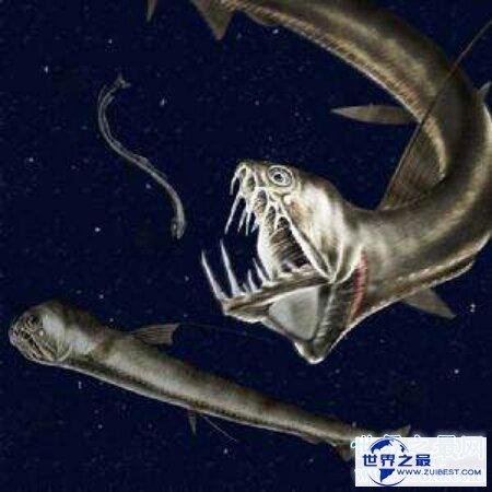 【图】那个陆地最深处的厉害捕食者之一毒蛇鱼