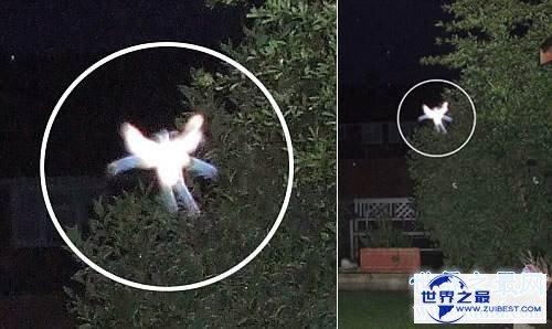 【图】外星人事情切实存在吗 曾有人拍到外星人视频