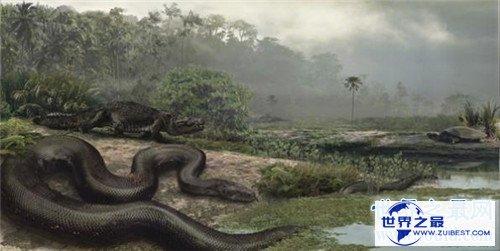 【图】巨蛇图片记录切实事情 曾有工人挖出地下巨蛇