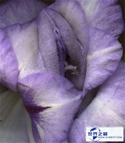 【图】女人私处长啥样图片引见 多种不同女性生殖器介