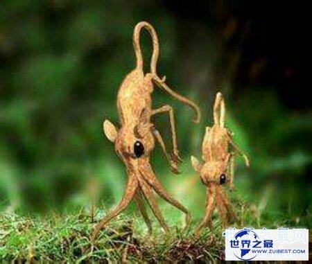 【图】那个日本科学家虚拟的一类动物鼻举动物