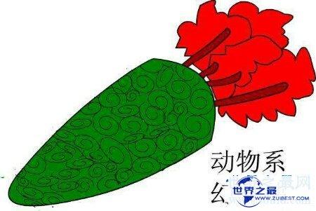 【图】让咱们来捋一捋日本漫画海贼王恶魔果实大全