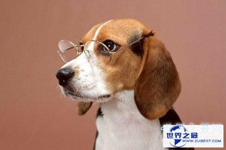 【图】狗是人类最忠实的冤家 狗能活多少年 狗的寿命是