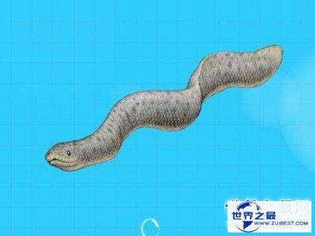 【图】以前现代常常会看到的一种蛇古杯蛇你知道吗