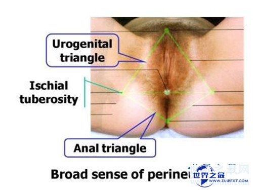 【图】生殖图女性结构引见 女性生殖器蕴含哪些局部