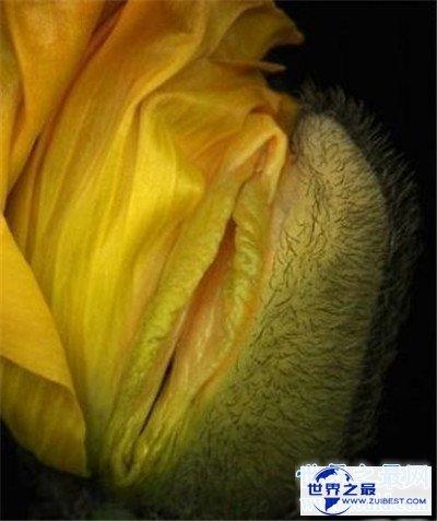 【图】女生殖器图展示两种生殖器状态 全体由外阴和阴