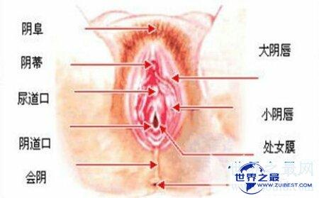 【图】女生殖器官图是意识女生的一本十分好的教科书