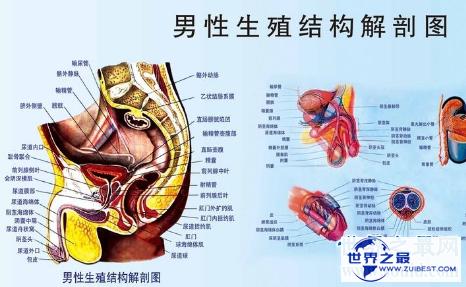【图】男性生殖器长度中国人与本国人有什么不同