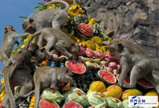 猴子自助餐节