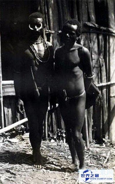 【图】象人族阴茎长的缘由 原来竟是和生存饮食无关