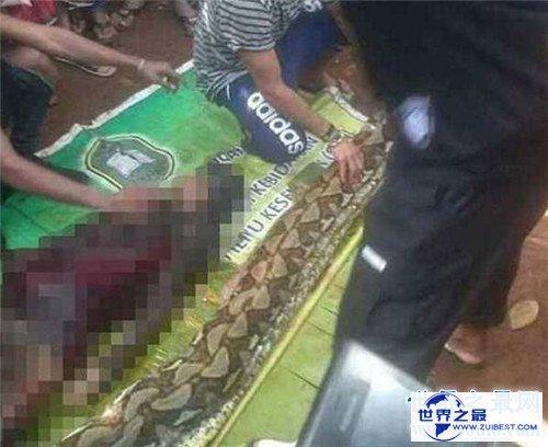 【图】蟒蛇吞人事情就像恐惧电影 印尼女性最终被生吞