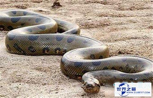 【图】巨蛇吃人事情是切实的吗 梦见巨蛇象征着什么