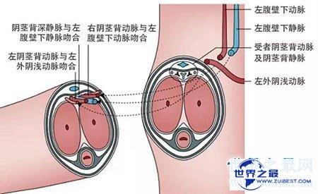 【图】男性生理大讲堂之男生殖器 勃起是什么意思