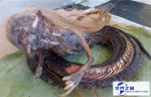 【图】美女蛇图片长什么样 曾有人头蛇身标本在国外展