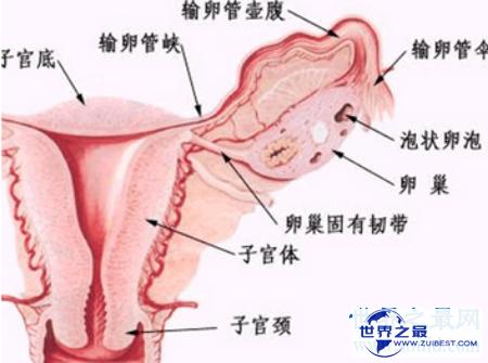 【图】女孩生殖器到底长什么样子 据说很迷人啊