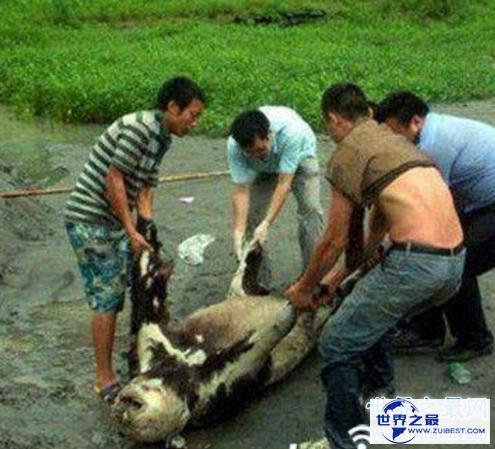 【图】中国十大灵异事情,四川成都惊现僵尸杀人事情