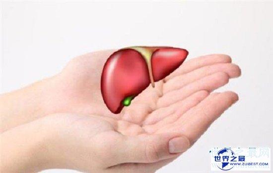 【图】肝的地位在5到9肋骨之间,肝脏不好要忌口