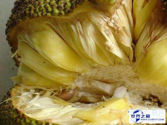 【图】菠萝蜜的核怎样吃?小编教你如何吃得平安有滋