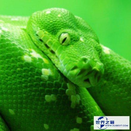 对蛇的恐怖