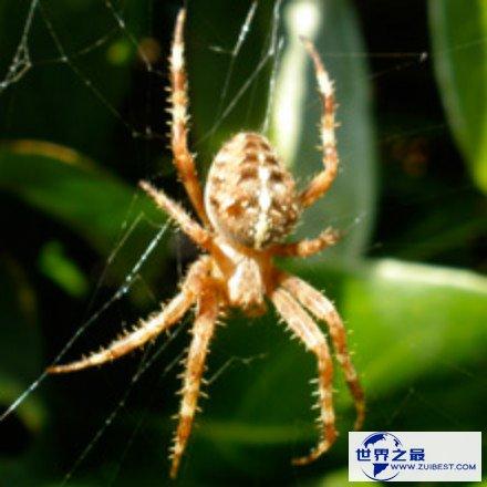 对蜘蛛的恐怖