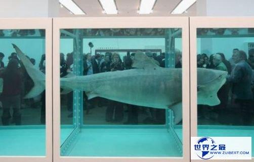 """""""死鲨鱼""""艺术品——1200万美元"""